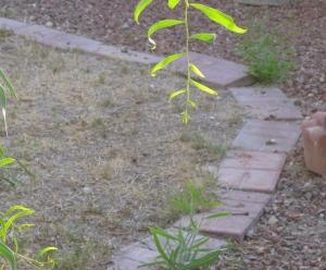 Neighbor's Bermuda lawn/Ryn Gargulinski