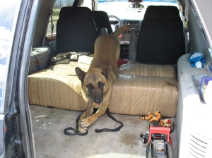 Drug dog Becky sits atop the 133 pounds of marijuana she sniffed out/AZDPS photo