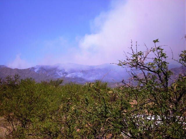 Elk Horn Fire/AZ State Forestry