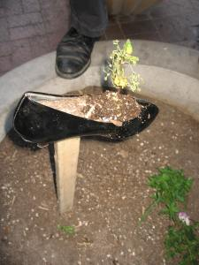 Pump in a planter/Ryn Gargulinski