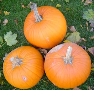DO decorate with organic pumpkins/Ryn Gargulinski