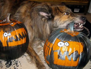 Sawyer liked Phoebe's pumpkin enough to eat/Art and photo Ryn Gargulinski