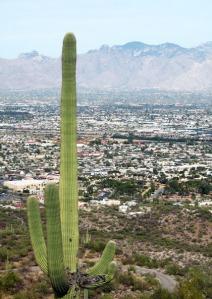 Saguaro over Tucson/Ryn Gargulinski