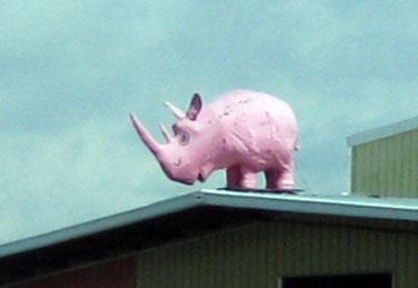 Pink rhino/Ryn Gargulinski