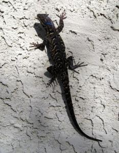 Lizard/Ryn Gargulinski