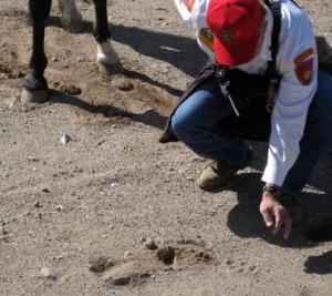 Herget asseses the mountain lion tracks/Ryn Gargulinski