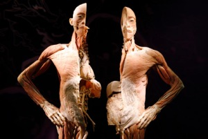 Bodies: The Exhibition opens in Tucson May 15/courtesy photo