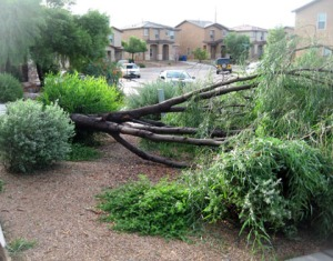 Aftermath of 2008 storm (yes, that was my tree)/Ryn Gargulinski