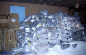 More than 7,200 pounds of pot seized from Tucson foothills house/ICE photo
